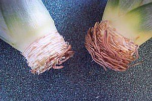 Как вырастить ананас из верхушки Image?t=0&bid=772170786873&id=772170786873&plc=WEB&tkn=*ZCHw-5Nev192mpwFuaTq5N7m43g